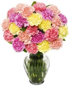 25-Stem-Pastel-Carnation-Bunch-Fresh-Flowers-for-your-loved-one