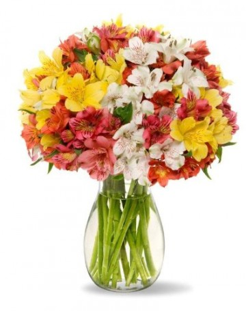 Peruvian Lilies - Fresh Flowers for your loved one