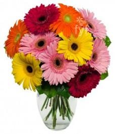 Summer-Gerbera-Daisies-10-Stems-FREE-Vase-Included-Flowers