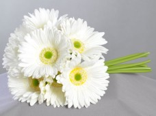 White-Gerbera-Daisies-Fresh-Flowers-for-your-loved-one