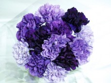 40-Fresh-cut-Mixed-Purple-Carnations-Fresh-Flowers-for-your-loved-one