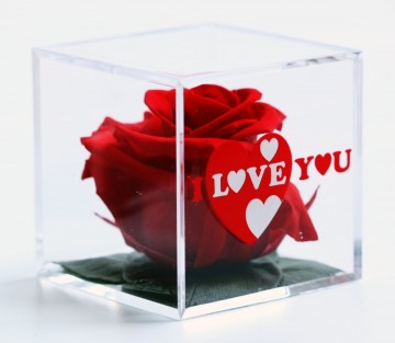 Romantic Red Rose in a Cube