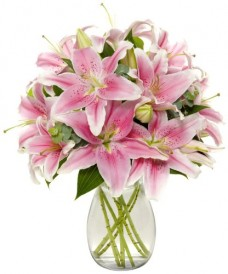 8-Stem-Starfighter-Stargazer-Lily-Bunch-Fresh-Flowers-for-your-loved-one