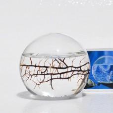 EcoSphere-Closed-Aquatic-Ecosystem-Sphere