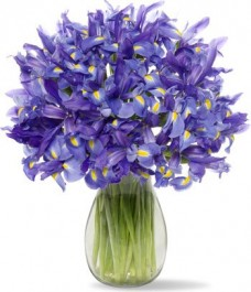 30-Blue-Iris-with-Jordan-Vase-Fresh-Flowers-for-your-loved-one