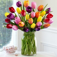30-Multi-Colored-Tulips-with-FREE-glass-vase-Flowers