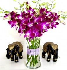 Fresh-Flowers-Purple-Dendrobium-Orchids-with-Vase